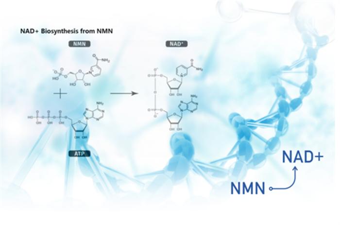 纯度高才是硬道理!99%高纯度NMN选澳洲KAYAJ NMN