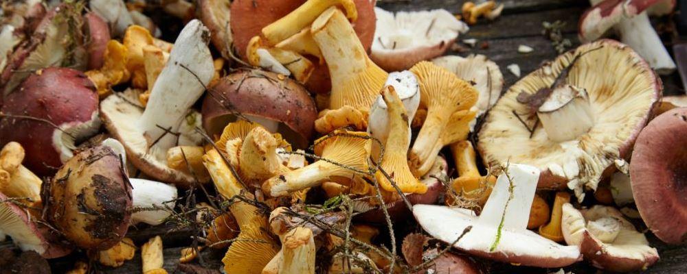 怎样安全食用野生菌 如何使用野生菌才是安全的 吃了野生菌中毒该怎么办